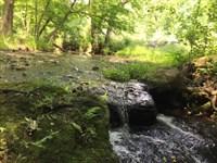 Gasaway Forest : Statham : Oconee County : Georgia
