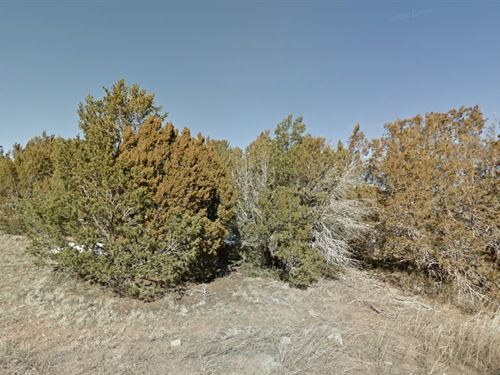 Torrance County, Nm $45,000 Neg : Bella Vista Estates : Torrance County : New Mexico