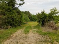 235 Acres Great Hunting And Invest : Counce : Hardin County : Tennessee