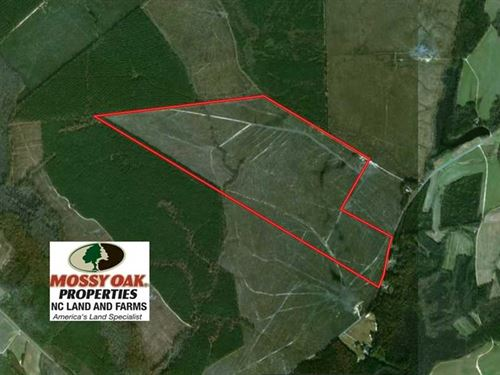 219 Acres of Timber Land For Sale : Scotland Neck : Halifax County : North Carolina