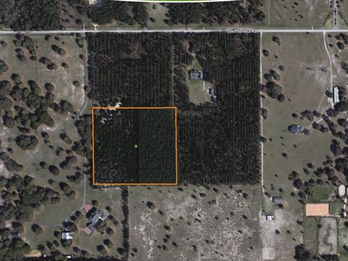 12 Acres Timber Ready For Homes : Eustis : Lake County : Florida
