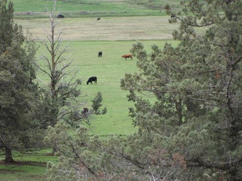 117 Acre Ranch : Bonanza : Klamath County : Oregon