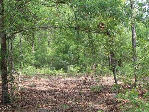 4.77 Acre Folkston GA : Folkston : Charlton County : Georgia