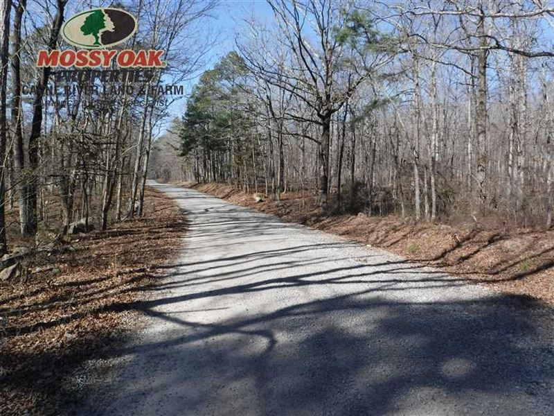 2 Acre Lot Just Steps From Nationa : Scotland : Van Buren County : Arkansas
