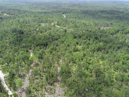 272 Acres Wooded, Owner Financing : Harlem : Columbia County : Georgia