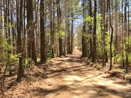 43 Acres Hunting Land Creek : Blue Hill : Jefferson County : Mississippi