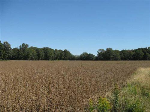 96 Acres Farmland And Hunting LA : Colt : Saint Francis County : Arkansas