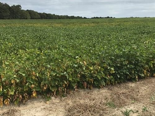 Beautiful Farm Land : Columbia : Houston County : Alabama