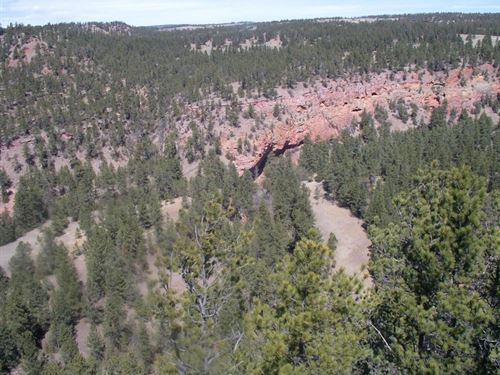 Red Canyon Rim Property : Custer : South Dakota