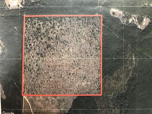 Great Hunting Tract : Chipley : Washington County : Florida