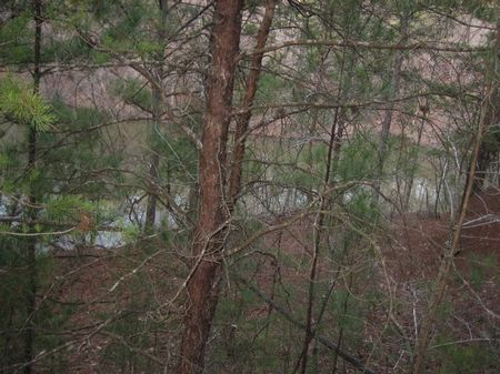 4.46 Acres Lot # 25 - Taylors Ferry : Quniton : Walker County : Alabama