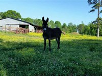 56 Acres With Brick House in : Statesville : Iredell County : North Carolina