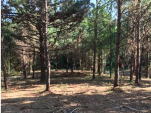 19 Acres In Rankin County : Florence : Rankin County : Mississippi