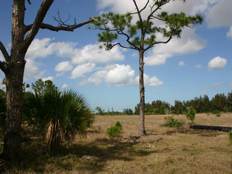 20 Acres Woods and Pasture : Fellsmere : Indian River County : Florida