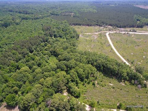 47.9 Ac, Timberland & Hunting : Columbia : Caldwell Parish : Louisiana