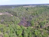 115 Ac Homesite / Hunting Property : Forsyth : Monroe County : Georgia