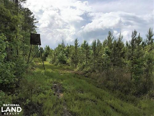 Ruffin Azalea Patch Rd Rec/Timber/H : Ruffin : Colleton County : South Carolina
