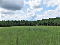 Farmer's Paradise Tract B : Campobello : Spartanburg County : South Carolina