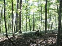 52 Acres Minutes From Bowling Green : Bowling Green : Warren County : Kentucky