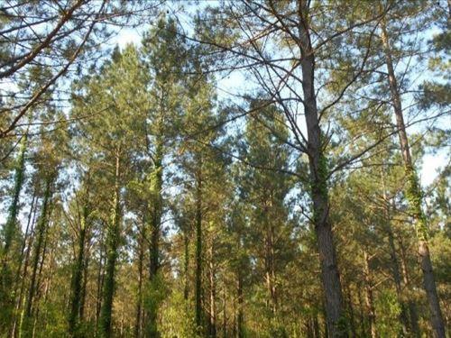 40 Acres In Yalobusha County In Oak : Tillatoba : Yalobusha County : Mississippi