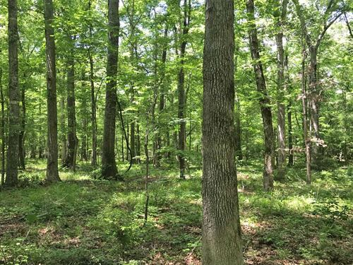 The Gobbler Hill Tract : Saco : Bullock County : Alabama