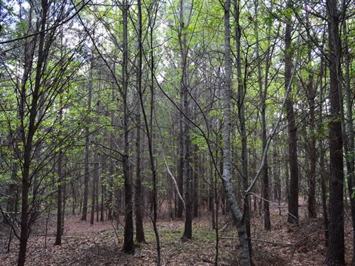 33 Acres Near Hwy 101 & Us 221 : Woodruff : Spartanburg County : South Carolina