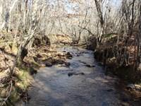 Beautiful Pine Woodlands, Creeks : Roanoke : Randolph County : Alabama