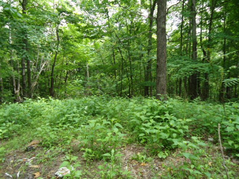 5.52 Surveyed Acres, Seller Terms : Celina : Clay County : Tennessee