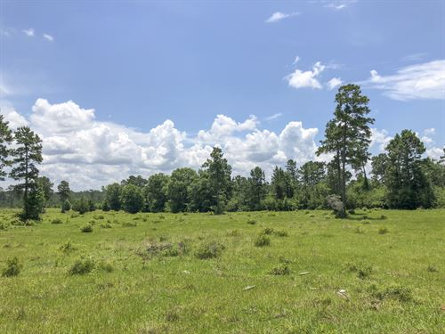 150 Acres Woodsman Road : Moscow : Polk County : Texas