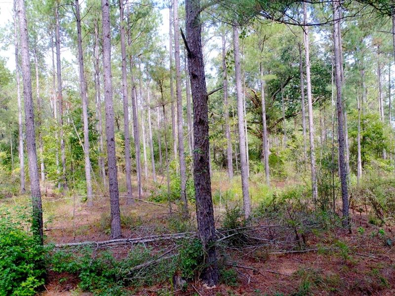 Managed Timber Investment : Belton : Anderson County : South Carolina