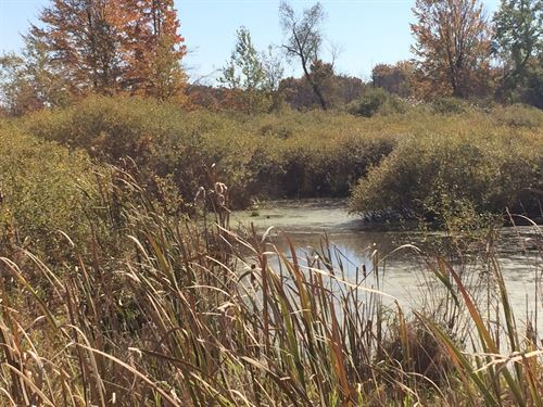 Rolling 80 Acres With Pond : Reed City : Osceola County : Michigan