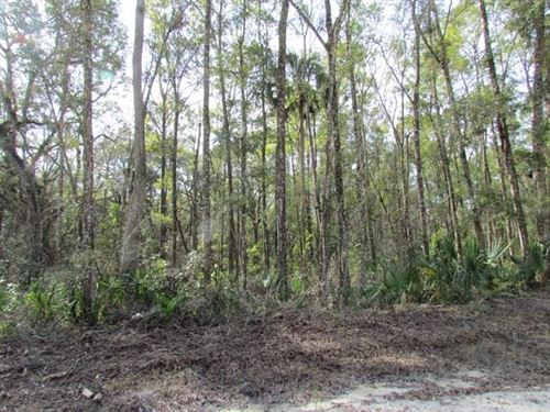 Just Reduced 2.75 Acres : Old Town : Dixie County : Florida