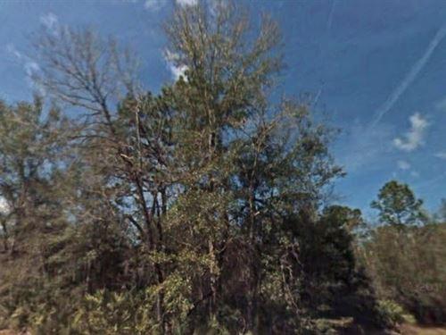 Citrus County, Fl $45,000 Neg : Crystal River : Citrus County : Florida