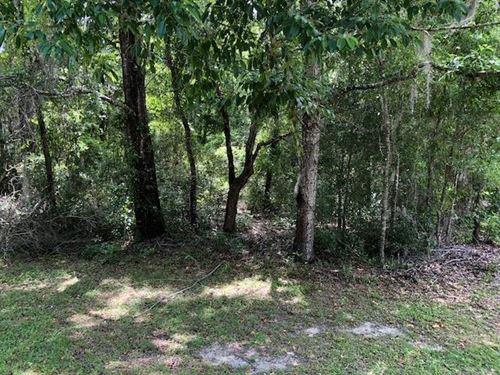 .23 Acre Lot 775806 : Williston : Levy County : Florida