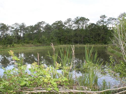 3 Acres In Jackson County In Moss : Moss Point : Jackson County : Mississippi