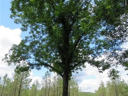 Great Hunting Tract : Kosciusko : Attala County : Mississippi