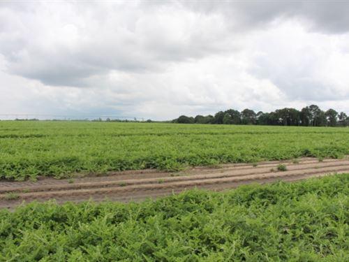 Prime Farmland - Rare Opportunity : Tifton : Tift County : Georgia