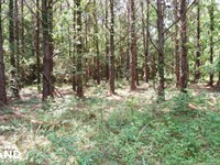 Akron Timber And Hunting Opportunit : Akron : Hale County : Alabama
