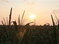 160.14 Acres, More OR Less, Cropla : Creighton : Antelope County : Nebraska