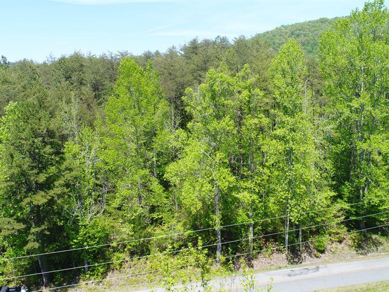 Hardwoods, Creek, Wildlife : Norris : Pickens County : South Carolina