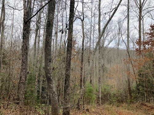 Wooded Acreage With Creek : Williamston : Anderson County : South Carolina