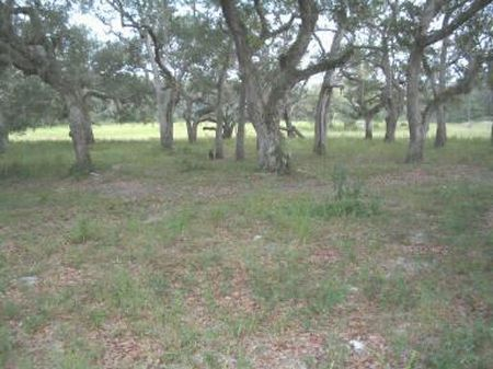 5 Acres W/ Well & Septic : Old Town : Dixie County : Florida