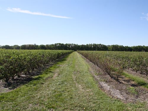 Turnkey Blueberry Farm : Sebring : Highlands County : Florida