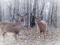 Highway Hunting Club Deer And Tur : Batesville : Independence County : Arkansas