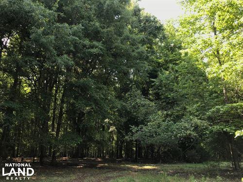 Mini Farm And Homesite, 8.62 Acres : Belton : Greenville County : South Carolina