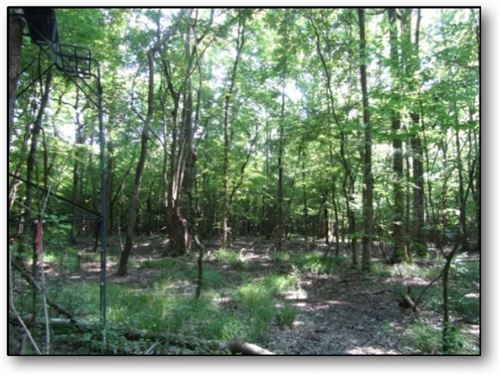 41 Acres In Montgomery County : French Camp : Montgomery County : Mississippi