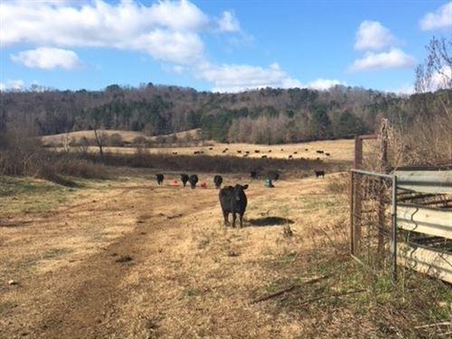 Marshall County - Cattle Farm : Guntersville : Marshall County : Alabama