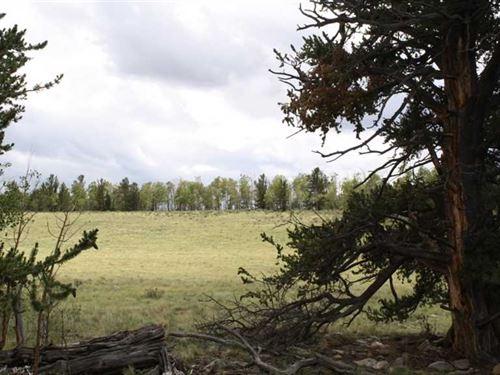 Forest Park : Buena Vista : Park County : Colorado
