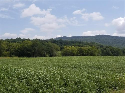 445.55+/-Acres Working Farm/Income : Huntland : Franklin County : Tennessee
