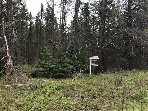 6 Wooded Acres In Newbold Area : Newbold : Oneida County : Wisconsin